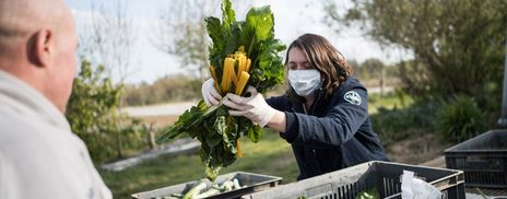 A migrant picking chard