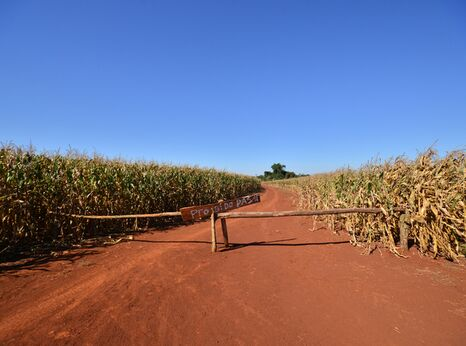 Entrance to the ancestral land of the Ava Guarani Tekoha Sauce community