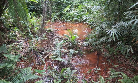 Oil still contaminates swamp in Rivers State, years after spill