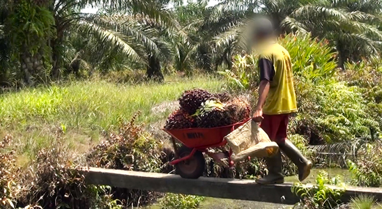 Amnesty: Companies using Indonesian palm oil tainted by abuse